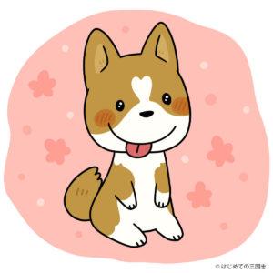 Corgi(コーギーの子犬)